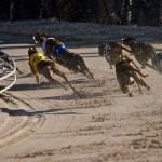 Greyhoundracing
